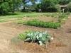 community-garden-5-26-2013-10