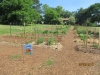 community-garden-5-26-2013-3