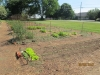 community-garden-5-26-2013-9